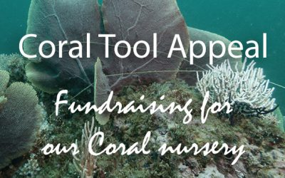 It's a tool appeal – Fundraising for our reefs