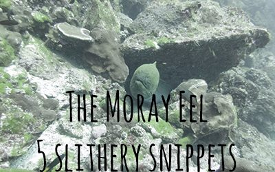 The Marvelous Moray Eel – 5 slithery snippets of fun