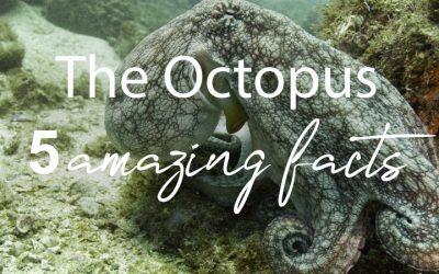 The amazing Octopus – 5 fun facts