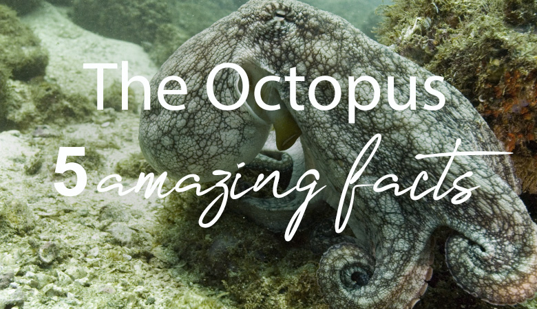 octopus 5 amazing facts