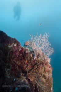 Coral in Costa Rica