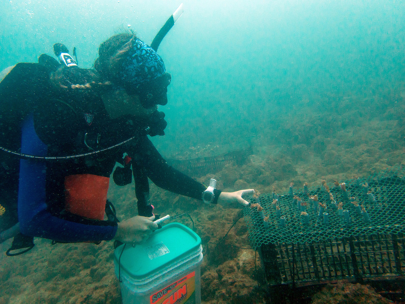 Student conducting Coral Restoration Marine Research Project
