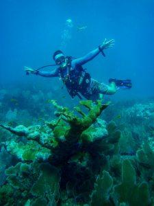 I love coral