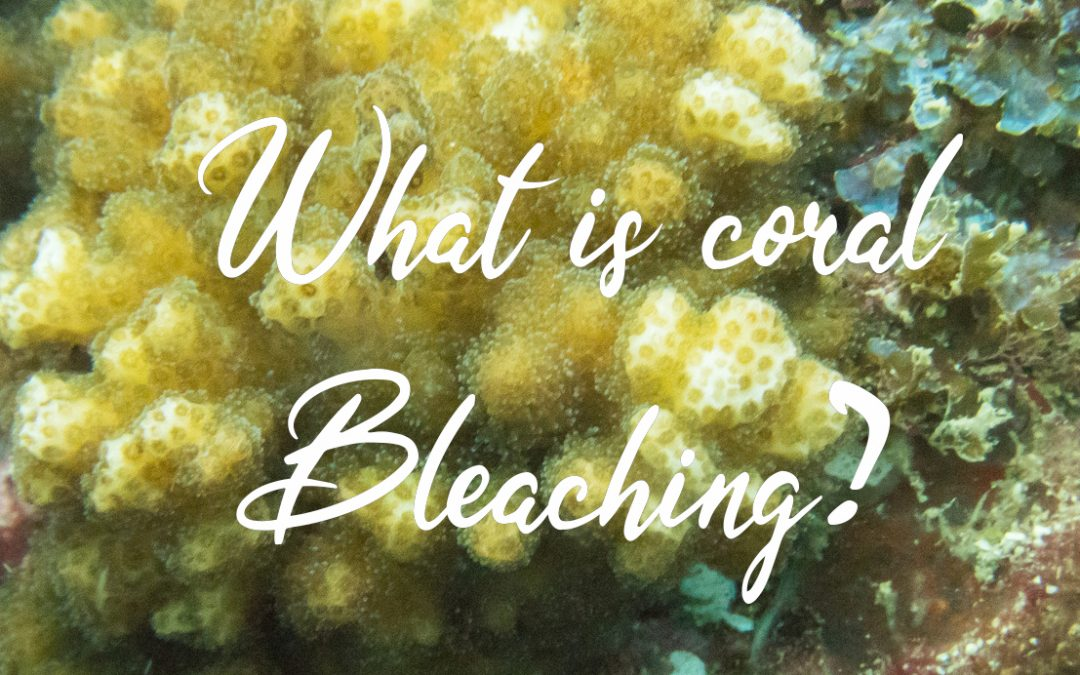 What is coral bleaching? Why does it happen?