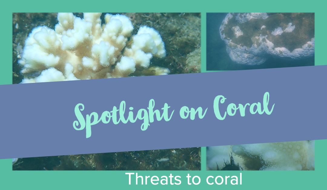 Spotlight on Coral – Threats to Coral