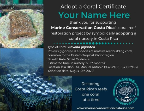 Adopt a Coral Nursery Certificate - English
