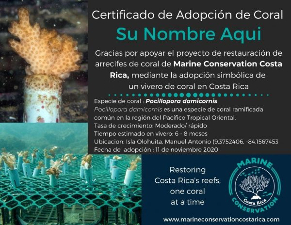 Adopt a Coral Nursery Certificate - Spanish