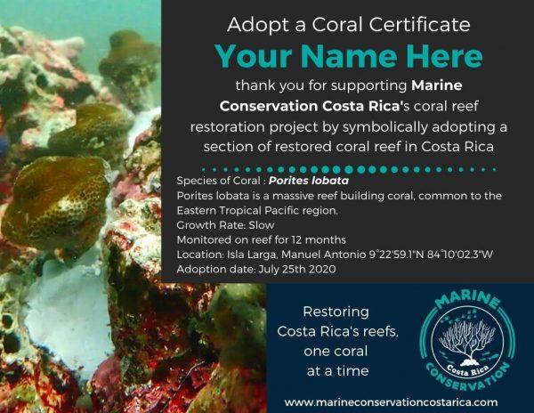 Adopt a Coral Reef Certificate