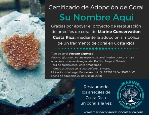 Adopt a Coral Fragment in Costa Rica Certficate with Marine Conservation Costa Rica
