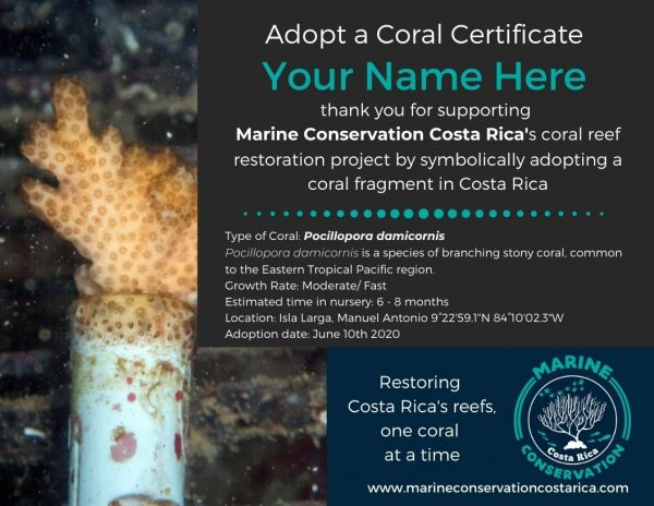 Adopt a Coral Fragment in Costa Rica Cerficate with Marine Conservation Costa Rica