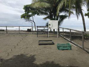 sea turtle nursery Damas island
