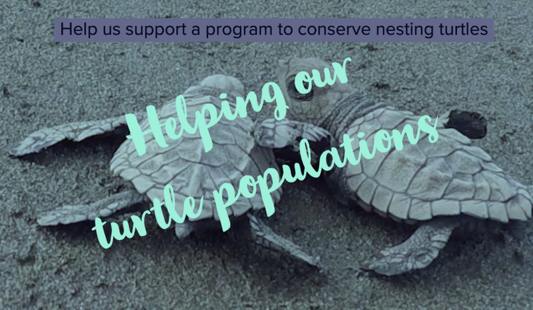Helping our local turtle population – Story of a family man with a  passion