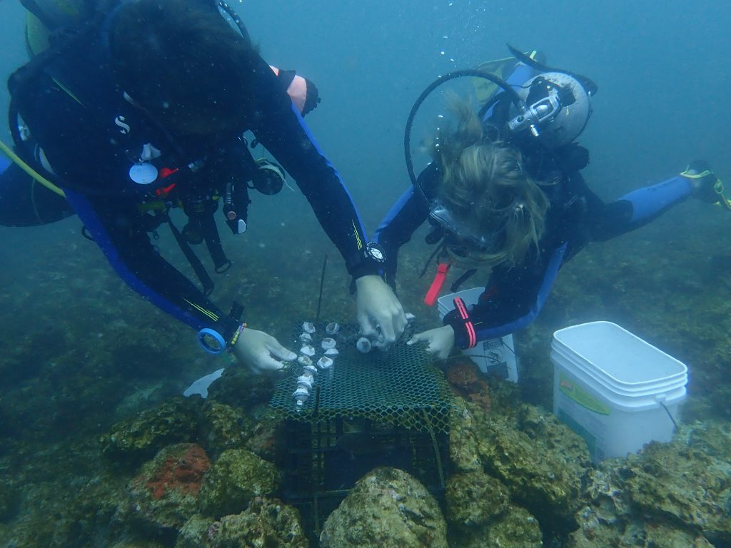 Coral Internships in Costa Rica