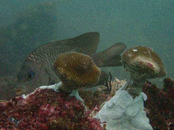 Adopt a Reef - Reef Restoration Costa Rica