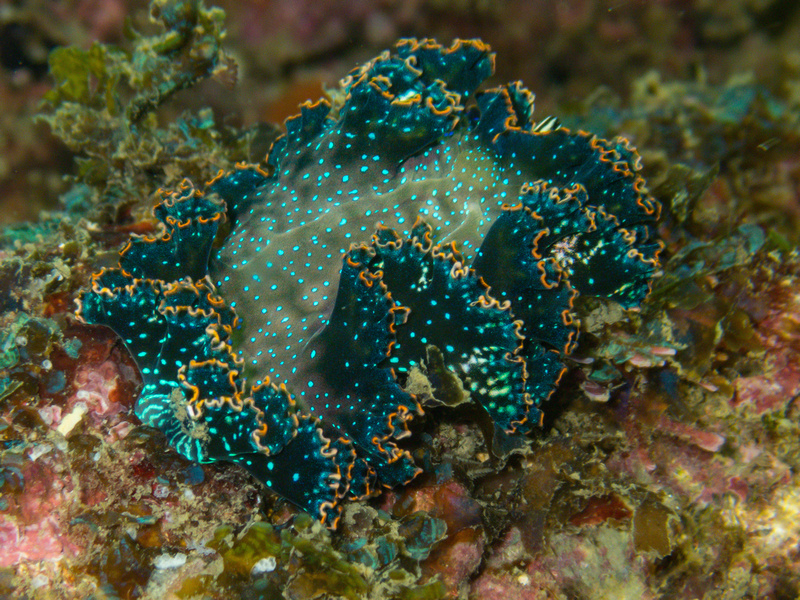 Nudibranch Course in Costa Rica