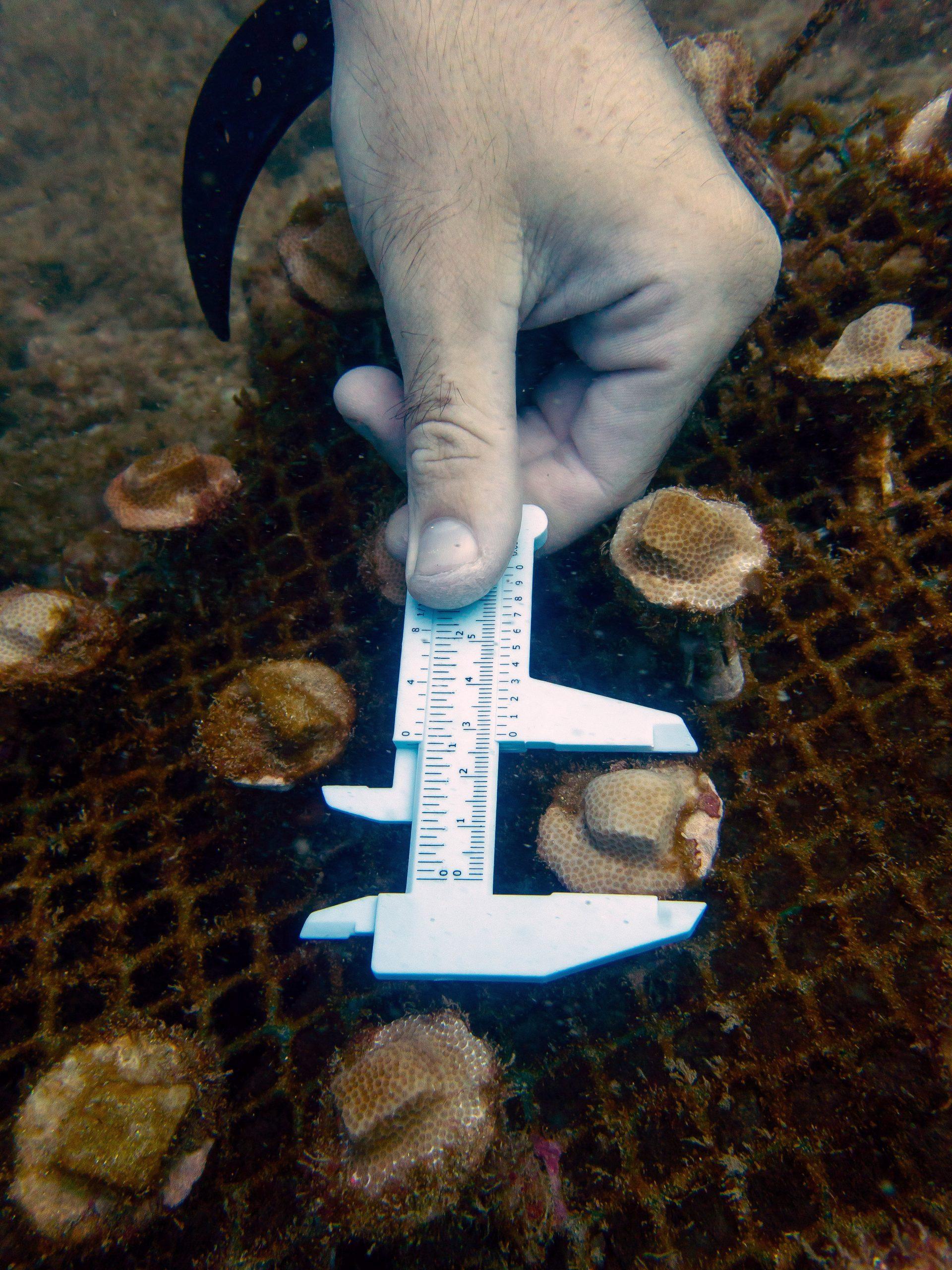 Coral Restoration Courses in Costa Rica