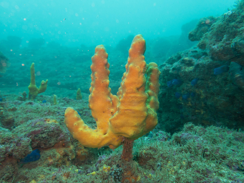 Sponge Course in Costa Rica