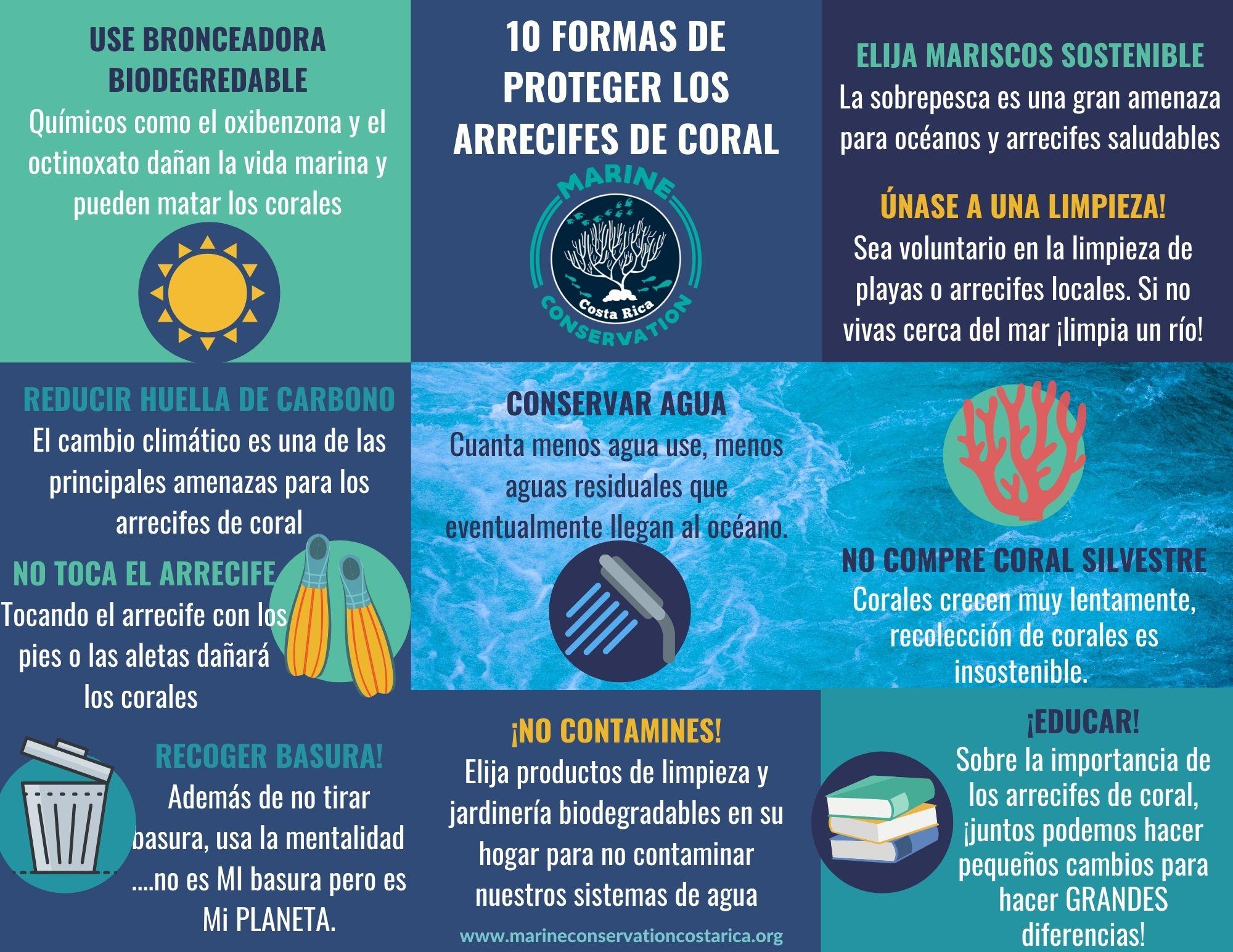 10 Formas de Proteger los Arrecifes de Coral