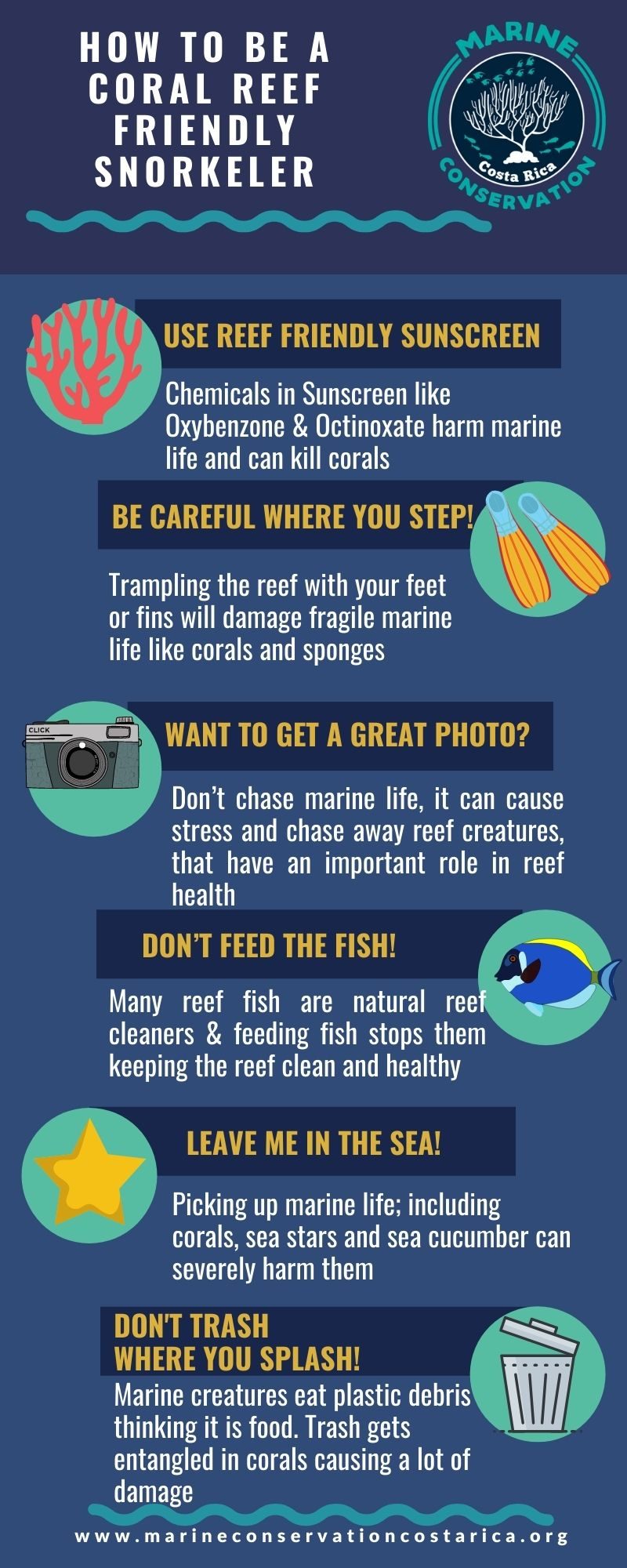 How to be a Coral Reef Friendly Snorkeler Infographic